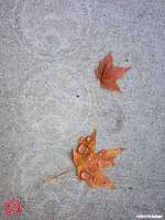 Fallen Leaves After a Rainy Day by Phaeton99