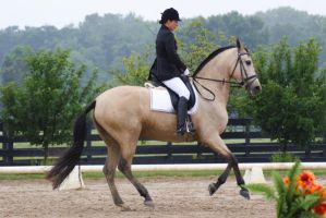 Buckskin Andalusian Mare 011 by diamonte-stock