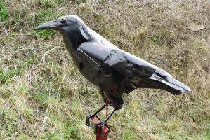 Big Black Crow by HubcapCreatures