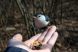 Birdie Treats by timseydell