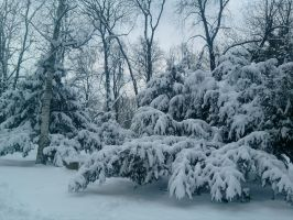 Snowy Trees by Dazed--Flame
