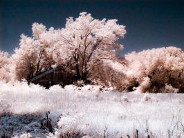Cotton Candy Trees by Pennes-from-Heaven