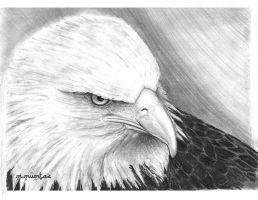 Eagle by mehmetmumtaz