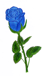 Blue rose by annie812
