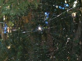Spider Web by Stock-gallery