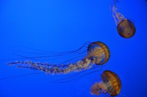 Jelly Fish VIII by esee