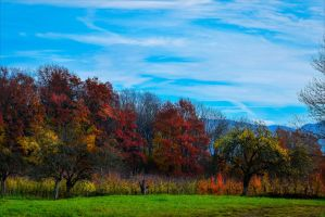 Early Autumn by Aenea-Jones