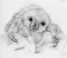 Baby Sloth by Shannon1309