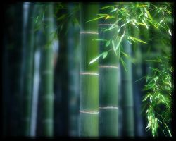 Bamboo Forest by welshdragon
