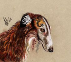 Russian Wolfhound by lonely-wolf-22