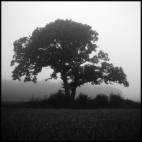 And there it stood in the mist.. by Robrocker