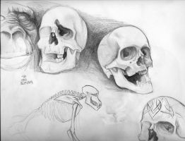 SKulls and apes study by pisopez