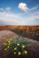 Canyon's Edge by jessespeer