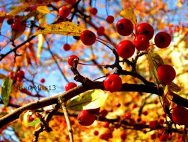 Autumn Berries by Michies-Photographyy