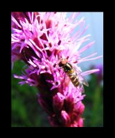 Your not a Bee by jesse-botanical