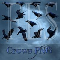 Crows png tubes by moonchild-lj-stock