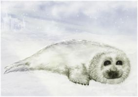 Seal cub by miss69
