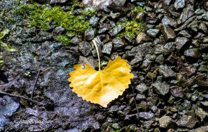 For the Love of Autumn by StephGabler