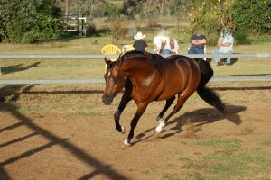 JA Arab Bay canter 3/4 toward one leg on ground by Chunga-Stock