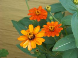 Orange Flowers by piercedpinup