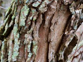 Bark and Lichen II by MadGardens