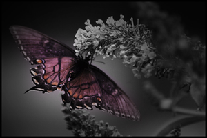 Insect by Think-Creative