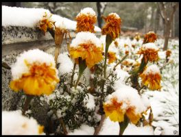 Beijing's first snow 2011 by danseKat