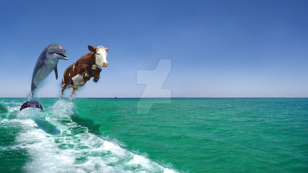 Dolphin and Cow - As Seen On TV by dolphinandcow