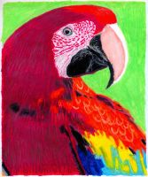 parrot No 1 by EwaBlackWidowVsHare