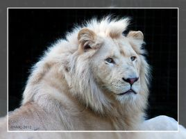 Credo - The White Lion by RoyallyCrimson