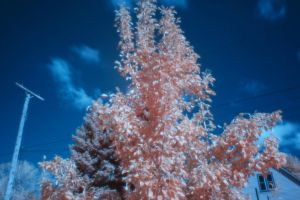 Infrared 20 by kelmeloo