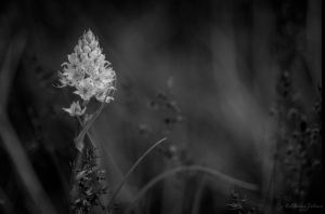 Wild Flower by ElaineSelene