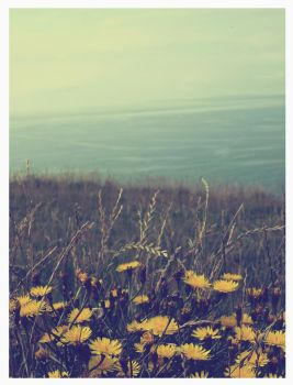 the cliffs of moher - vintage by Vive-Le-Rock