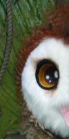 Barn Owl sneekpeek by LilleahWest