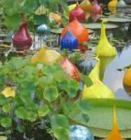 Amazon Water Lilies-Chihuly by Angelblue1