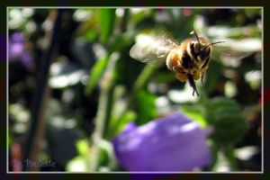 Bee Haven by shutterbugmom