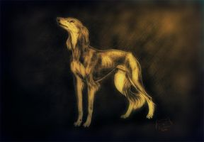 The Saluki by t1sk1jukka