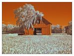 Barn, infrared.P1010844, with story by harrietsfriend