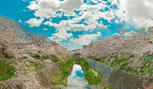 spring of kawasaki river by Godling-Studio