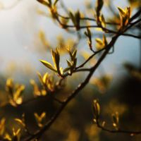 Spring breezes by untitled55