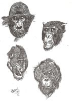 Primate Portrait Practice (Say that 10 times fast) by HodariNundu