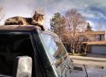 Cat on Jeep (2) PS by Kipporah