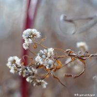 Autumnal_Filigree V by hyneige