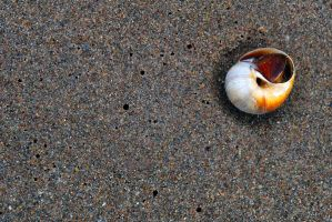 shell by LucieG-Stock