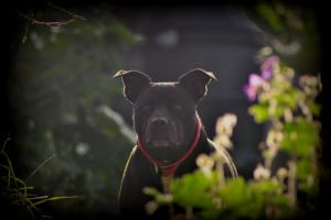 STAFFIE DOING CUTE by trevj