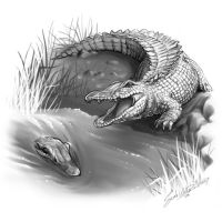 Crocodiles by dreamie