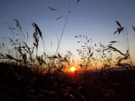 Whispering grass by M-e-t-a-t-r-o-n