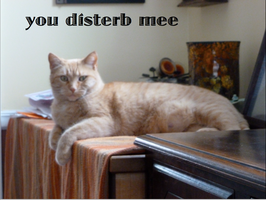 LOLCat Disturbed by WarriorCatLuver123