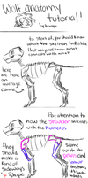 Anatomy Tutorial by buIIshifters