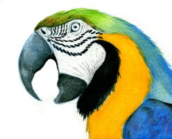 Blue Macaw by The-Iby